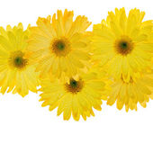 Yellow flowers with water droplets — Stock Photo