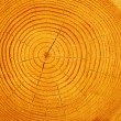 Cut tree pine — Stock Photo #1246355
