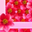 Flowers  pink  petals — Stock Photo