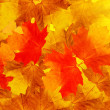 Leaves maple tree — Stock Photo #1248875