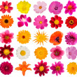 Flowers  decorative  collection — Photo