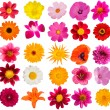 Flowers  decorative  collection — Foto de Stock