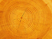 Cut tree pine — Stock Photo