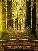 Wood autumn landscape — Stock Photo
