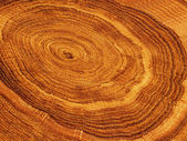 Cut tree oak — Stock Photo