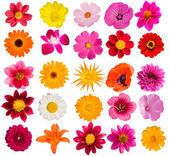 Flowers decorative collection — Stock Photo