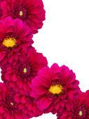 Flowers peonies ornament — Stock Photo