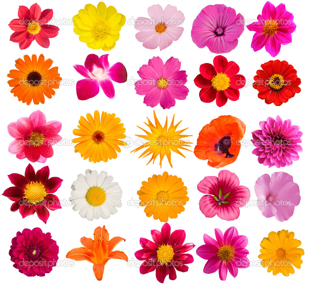 flowers decorative collection stock photo 1249373 - Decorative Flowers