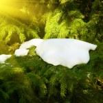 雪枝の木 — ストック写真
