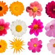 Flowers decorative collection — Stock Photo #1251597