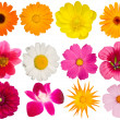 Flowers decorative collection — Stock Photo #1251623