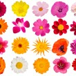 Flowers decorative collection — Stock Photo #1251685