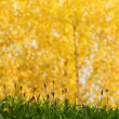Stock Photo: Grass abstract background