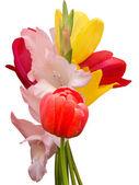 Flowers tulips gladiolus bouquet — Stock Photo