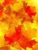 メープル ツリーを葉します。 — ストック写真