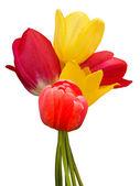 Flowers tulips bouquet — Stock Photo