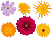 Flowers decorative different — Stock Photo
