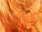 Textures tree oak — Stock Photo