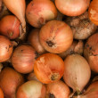 Vegetables  onions - Stock Photo
