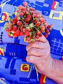 Wild strawberry bouquet — Stock Photo
