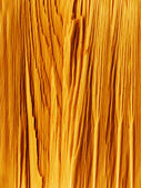 Rough cut of a tree — Stock Photo