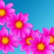 Flowers decorative — Stock Photo