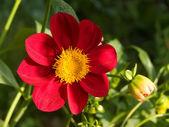Flower in a garden — Stock Photo