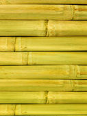 Bamboo stalks — Stock Photo