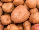 Potato tubers — Stock Photo
