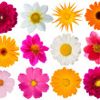 Flowers decorative collection — Stock Photo #1371973
