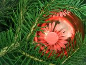 Tree fur-tree coniferous — Stock Photo