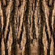 Tree trunk — Stock Photo #1600489