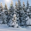 bomen bont-tree winter — Stockfoto #1646311