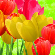 Flowers tulips — Stock Photo #2173603