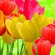 Flowers tulips — Stock Photo #2173603