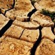 Stock Photo: Cracks, ground
