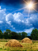 Wood sky clouds field — Stock Photo