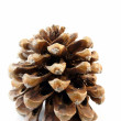 Pine Cone - Stok fotoraf