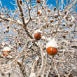 Royalty-Free Stock Photo: Winter Apples