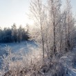 Winter landscape — Stock Photo #1542157