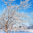 Winter landscape — Stock Photo #1542305