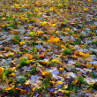 A carpet of autumnal  leaves covered wit — Stock Photo