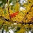 Stock Photo: Larch and oak