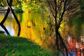 Der golden river — Stockfoto