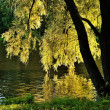 Golden evening in the park - Stock Photo