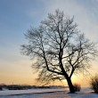 A tree against the sunset — Stock Photo
