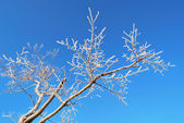 A branch covered with hoar-frost — Stock Photo