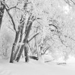 Snowfall — Stock Photo #1571291