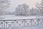 Parc d'hiver avant le coucher du soleil — Photo