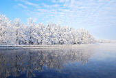 Winter trees reflecting in water — Stock Photo